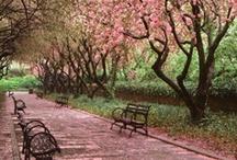 Springtime in Central Park  / by Central Park Conservancy