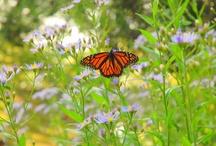 Pollinators in Central Park / Seven pollinators pollinating in Central Park. / by Central Park Conservancy