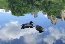 Animals & Pets in Central Park  / by Central Park Conservancy