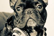 Frenchies / French bulldogs / by david bromstad