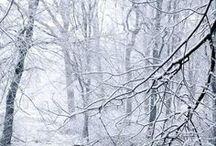 winter / by Magda Kolodziejczyk