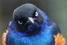 "Fuck You, I'm a Bird / ""I'm a Bird! I'm a Bird! I'm a Bird! I'm a Bird! I'm a Bird! I'm a Bird! I'm a Bird! I'm a Bird! I'm a Bird! I'm a Bird! I'm a Bird! I'm a Bird! I'm a Bird! I'm a Bird! I'm a Bird! I'm a Bird!"" - Hyperbole and a Half / by Katy Osterwald"