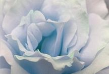 ❤ Blue ~Pale ❤ / lovelies in the palest shade of blue...♥♥ / by Debbie Orcutt