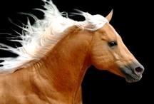 Equus: The Palominos / by @Jurisprude