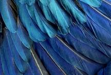 BLUE / by Sage Kemmerlin