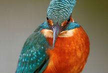 Birds!! / by ~allthingsshabby~
