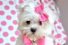 Just Plain Cute / Adorable things / by Amy Gourley-Myers