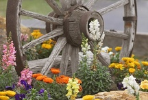 Gardening / by Jackie Burroughs