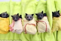 Pocket Pets / Pets in pockets. / by Audry Taylor