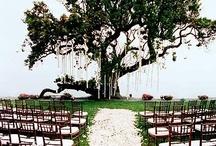 Wedding  / by Sara Beer