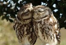 ♥Owl Love♥ / by Creatique Candy