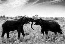 >>>NaturalWorld<<< / by Karen McKay