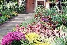 Backyard & Garden Ideas / by Christine E Stout