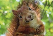 Oh, so Cute! / by Christine E Stout