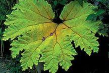 Farm - Concrete/Hypertufa Leaf Castings & Molds / by Christine E Stout
