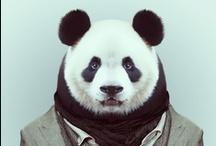 panda's <3 / by Luna Garcia