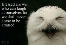 JUST4FUN / laugh every chance you get! / by Sunni Ashforth