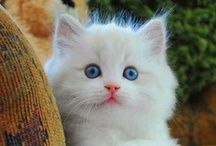 Heeere Kitty, Kitty, Kitty! / by Gail Zapata