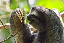 Biome - Tropical Rainforest / by Jean Plitt