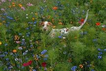Cuteness in the Garden / Our favorite customer photos of adorable animals & children in their gardens. We hope you enjoy as much as we do!  / by American Meadows