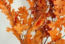 Autumn Decorations / by Ateny Pereira