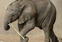 Animal ... Elephants / by Betty Baker