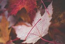 On Fall / by Juliana Turner