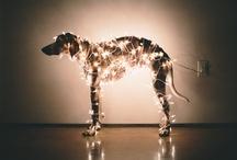 Animals / by Belinda Sergeant