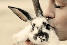 bunny / by Ebby Dark