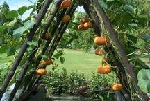 garden ideas / by nana's pinterest
