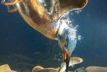 For the Birds / by Mary Oklahoma Thoma