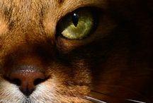 GATOS/CATS / by Mar Cantón (OcéanoMar)