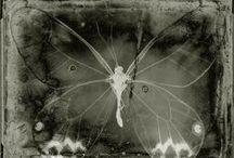 Dead Nature / (Wabi Sabi, Still Life... Dead Nature) / by Mar Cantón (OcéanoMar)