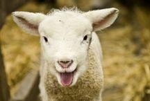 when we have animals (barn) / by Kara Kregel
