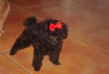 J'adore Poodles / by Benilda Nya Fashion Designer | Author | Romance Advocate