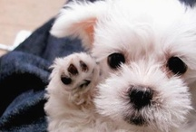 Puppy Love / by Patricia Jones