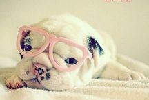 Puppy TLC / First aid, natural remedies, natural food recipes, behavior, care tips & adorable pics!  / by Dawn Hunnicutt