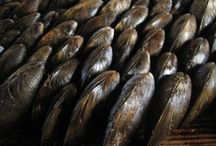 Eclade de moules charentaise / This recipe is a crazy specialty of Charente-Maritime in France.It makes in the summer, when the pine needles are dry. The molds are set on a single piece of wood, opening downwards.The first three molds stand around a nail,like a teepee erected, others fit together like a house of cards, and the whole is covered with pine needles thoroughly dry, then set it on fire.It opens in a very short time,we hunt the ashes with a range and enjoyed the fast, nice and warm with salted butter and good bread! / by Valérie Zénati