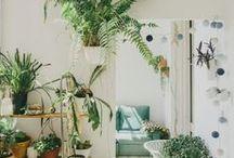 Homey / by Danielle Kroll