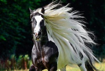 beautiful horses / by Connie Rhoden