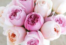 Flowers / by Megan Wharton