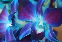 1 • IT GROWS ON YOU ~ ORCHID / by Bonnie Hanszen