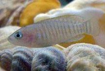 Pets| Fish Keeping / by Melissa Prado