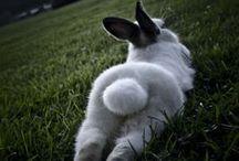 Pets| Bunnies & Other / by Melissa Prado