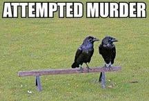 Funnies / by Rebekah Aubree
