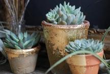 Botanics / by Maggie Nigro