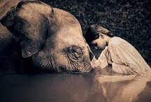 Beautiful Pics / by Sharon Pind