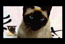 Best viral videos  / by Alex Duclaux
