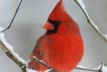 Birdies / by Ellen King