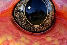Up close / The interesting patterns, color, and texture of our world when you get up close.  / by Ellen King